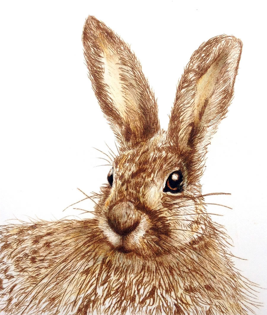 The Curious Hare drypoint print